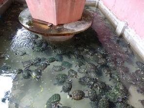 Refugio de las tortugas en la Pagoda del emperador de Jade