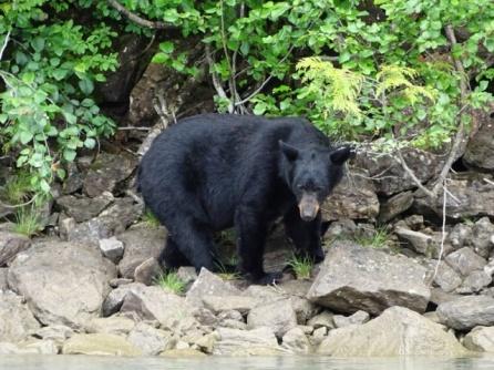 oso en blue River